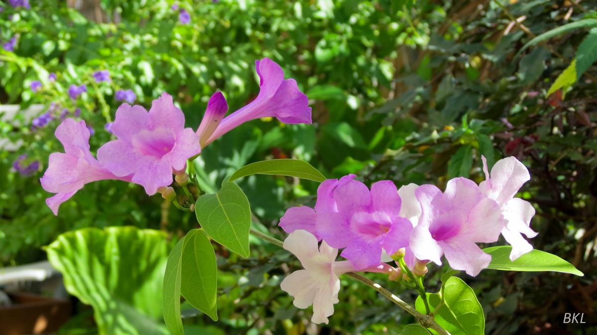 Jardin balcon le de la r union nouvelle version for Entretien jardin ile de la reunion